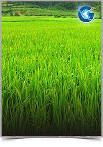 Journal of Agronomy and Agricultural Aspects (ISSN: 2574-2914)